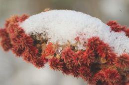 Bright Spots In The Snow