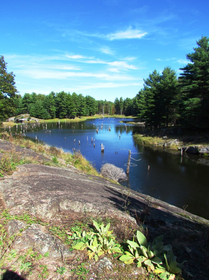 lake and woods in frontenac provincial park canada
