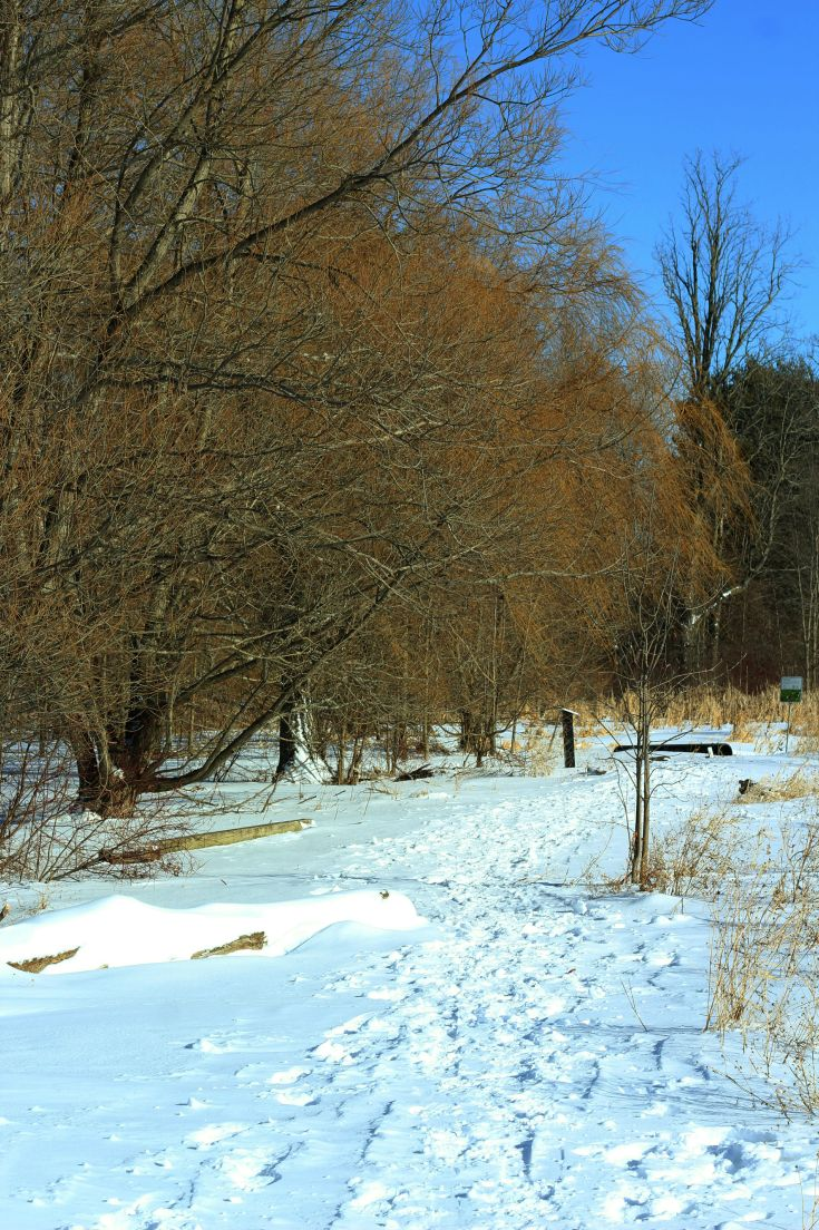Image of a path in woods in winter with snow.