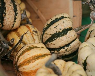 Colourful gourds at Kingston's Memorial Centre Farmer's Market