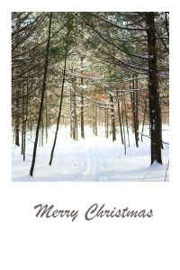 Tracks in the snow in a wintery forest - Christmas card.